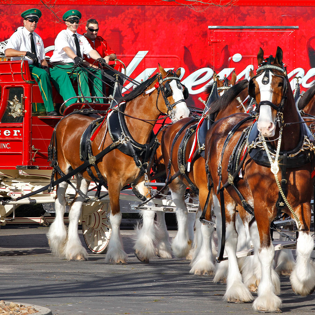 Anheuser-Busch Clydesdales | Explore St. Louis